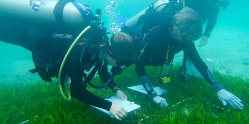 two divers seagrass counting